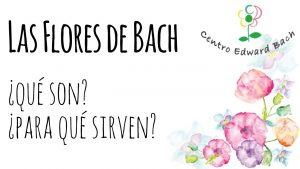 Flores de Bach, qué son y para qué sirven